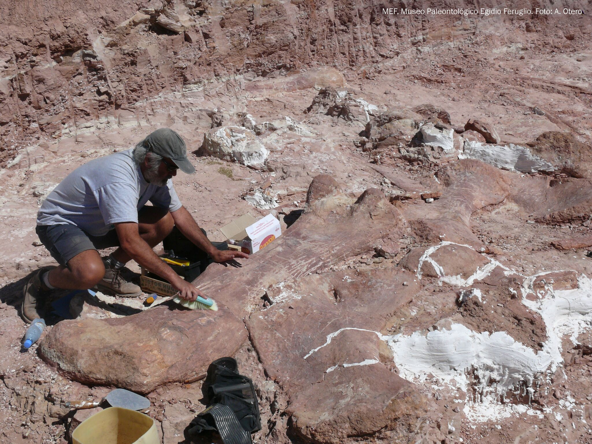 Fossil Excavation
