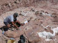 Fossil Excavation