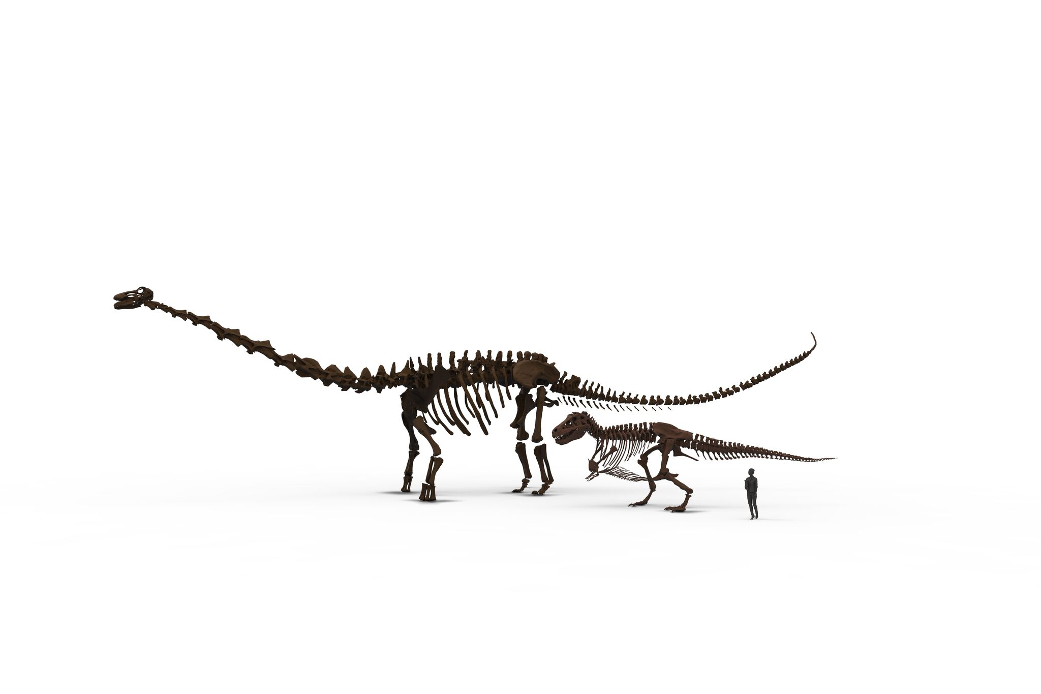 Patagotitan SUE visitor 2