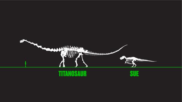 Titanosaur and SUE 2