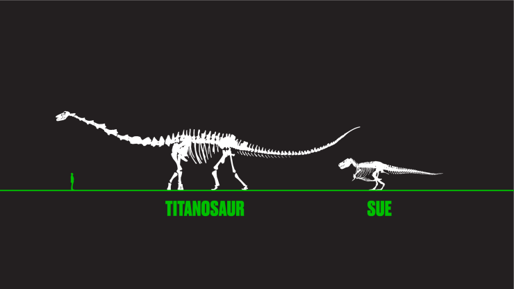 Titanosaur and SUE 2