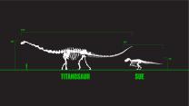 Titanosaur and SUE