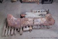 Titanosaur femur