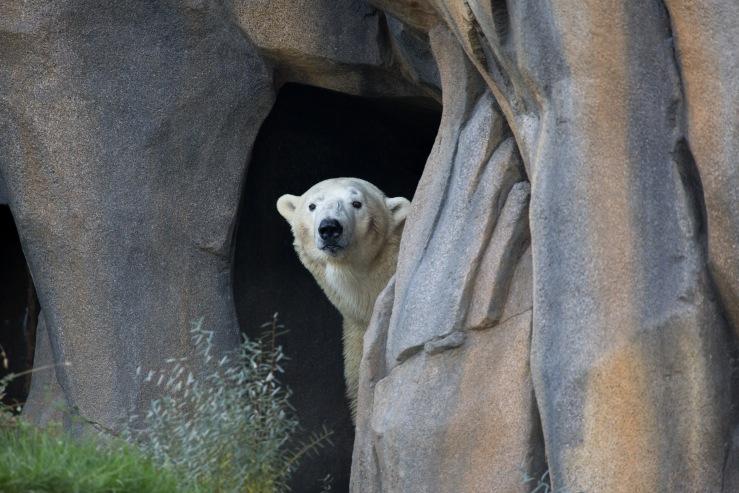 20161031_JF_Polar_Bear-43