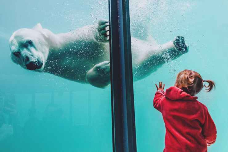 girl standing in front of polar bear