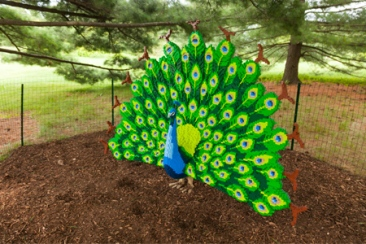 Nature_Connects_peacock