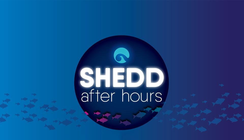 sheddafterhours_hero