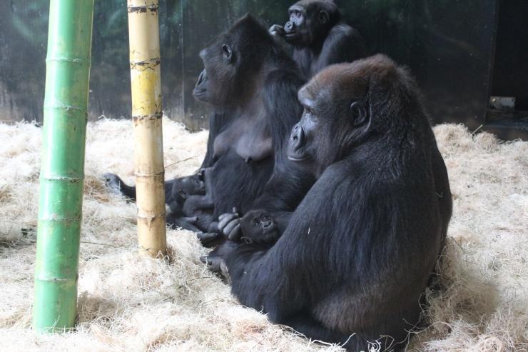 Bana, Rollie, infants 7.11.19b (Nayembi in background).jpg