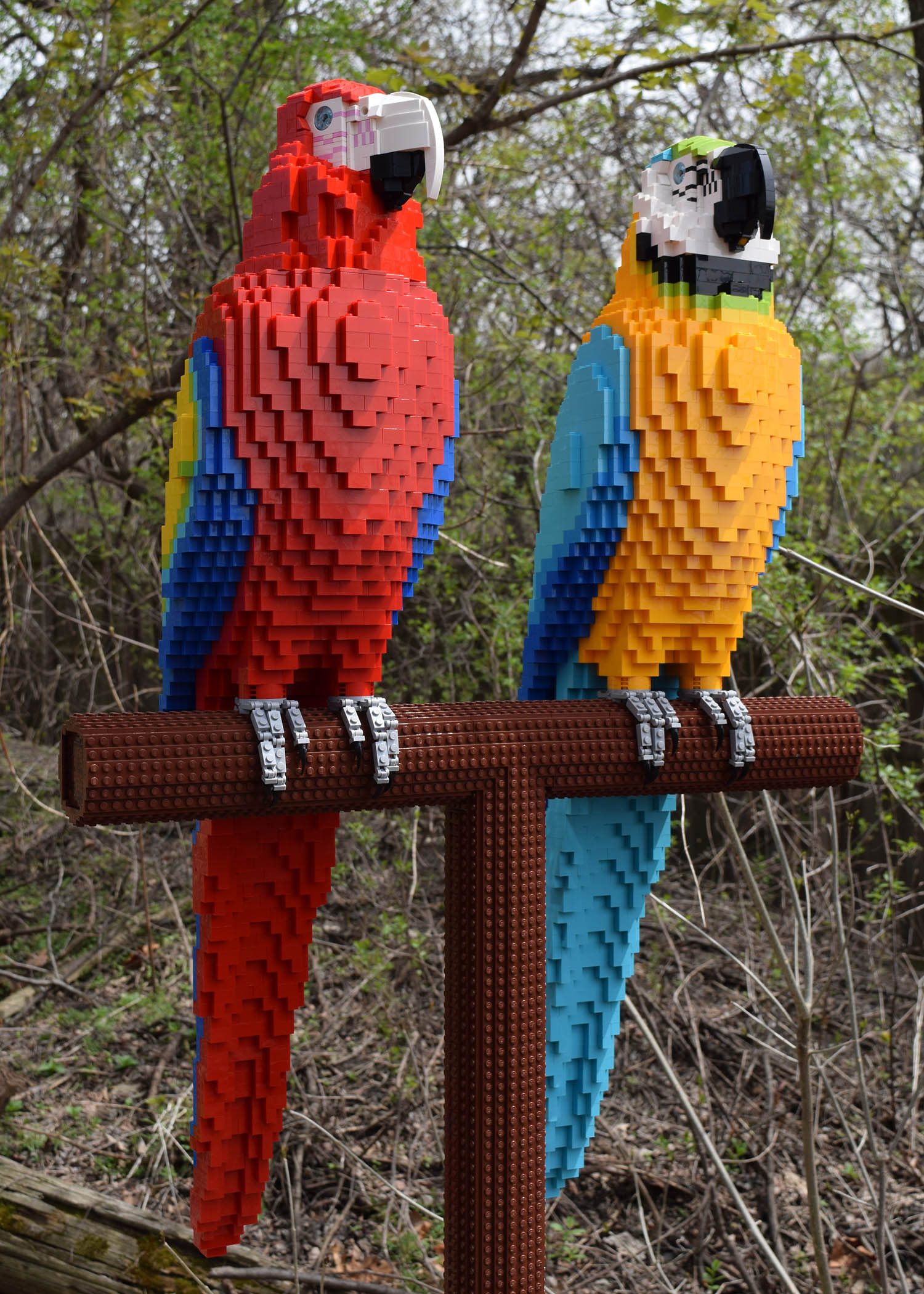 Brick-Safari-Macaws.jpg