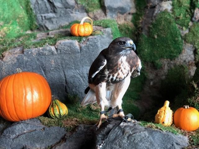 Halloween Falcon 1