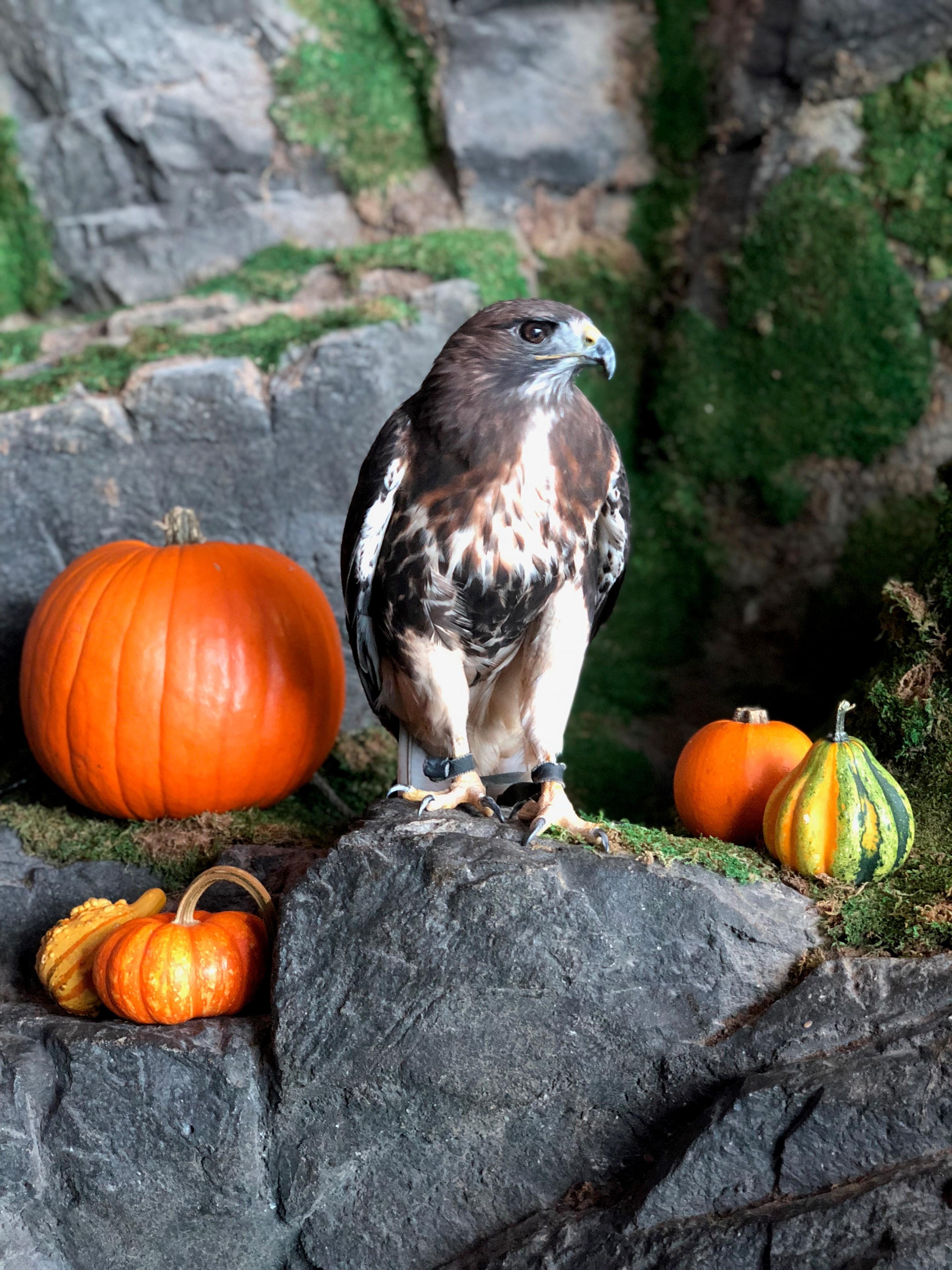 Halloween Falcon 3.jpg