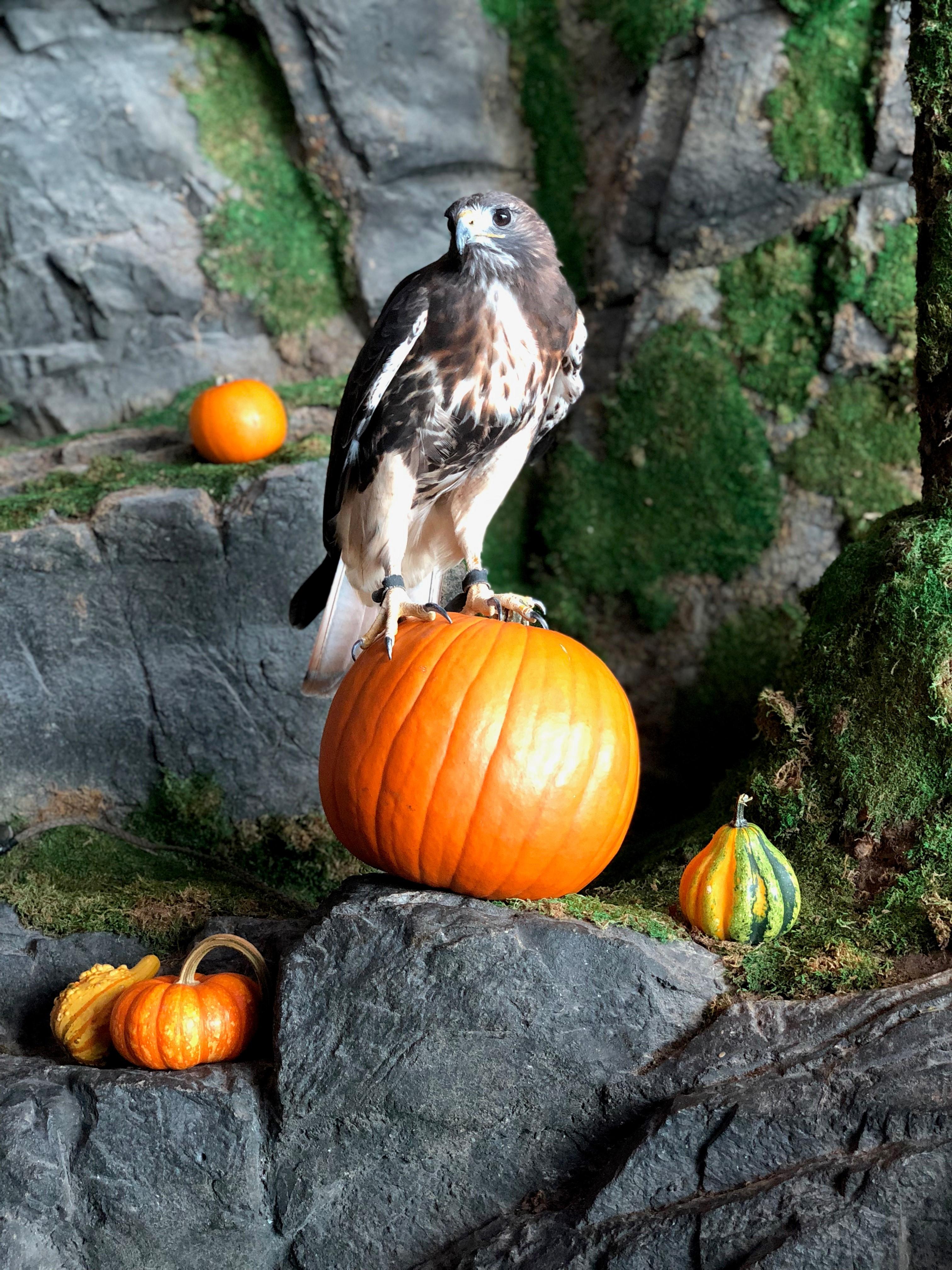 Halloween Falcon 4.jpg