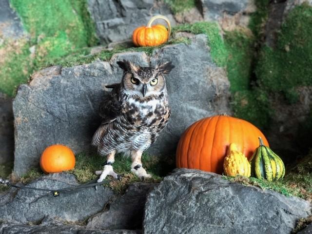 Halloween Owl 1.jpg