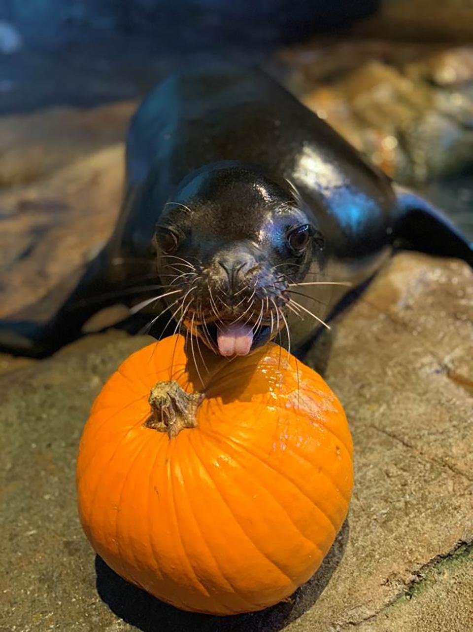 Sea Lion_.jpg